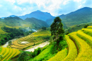 Rice Terraces of Mu Cang Chai, Vietnam