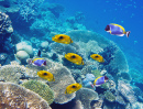 Tropical Fish over a Coral Reef