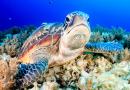 Green Turtle on the Sea Bed